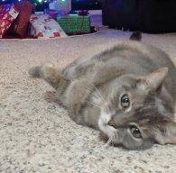 Kitty Worrier